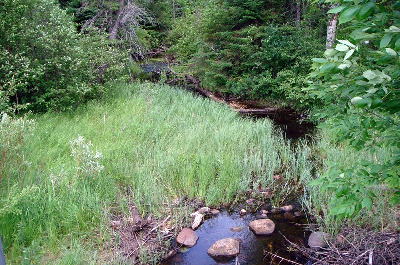 Wilderness Park 2