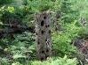 Wilderness Park 3