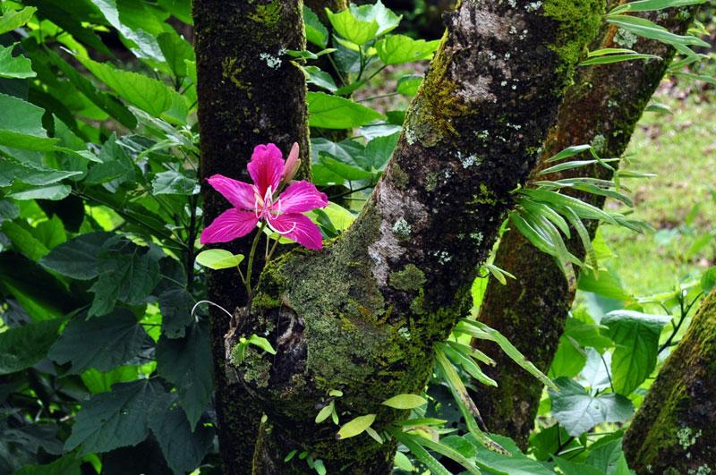 maui_flowers_5