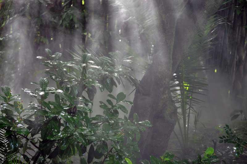 Animal Kingdom - Humidity!